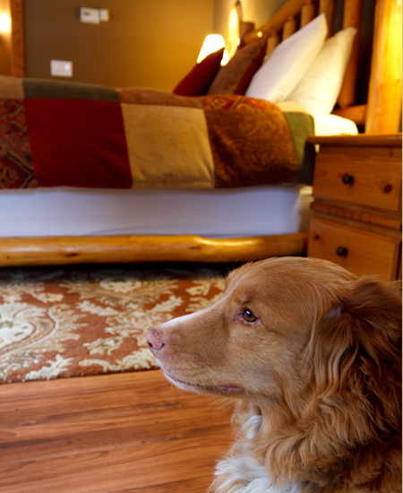 Well behavied dog in Explorer's Suite at The dog friendly Prairie Creek Inn